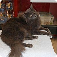 Adopt A Pet :: Claude - Phoenix, AZ