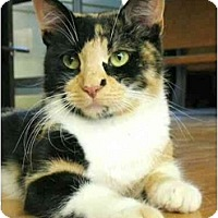 Adopt A Pet :: Spicy - Plainville, MA