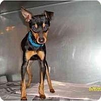 Adopt A Pet :: Carson - Nashville, TN