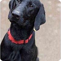 Adopt A Pet :: Samuel - Portland, OR