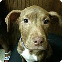 Adopt A Pet :: Laila - Geismar, LA