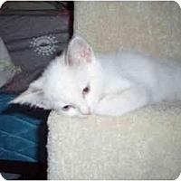 Adopt A Pet :: Clarabelle - Davis, CA