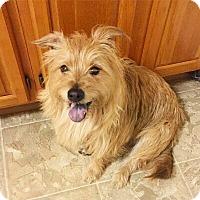 Adopt A Pet :: Rosco - Brooklyn, NY