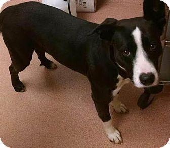 Border Collie/Retriever (Unknown Type) Mix Dog for adoption in Columbus, Georgia - Kiera 6115