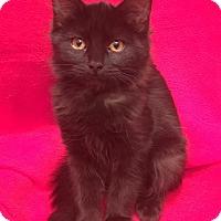 Adopt A Pet :: Colin and Kelli - Scottsdale, AZ