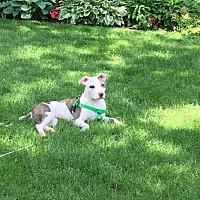 Adopt A Pet :: Clementine - Villa Park, IL