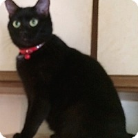 Adopt A Pet :: Carly - Cocoa, FL
