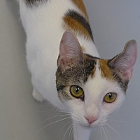 Adopt A Pet :: Patchy - Manning, SC