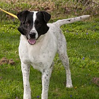 Adopt A Pet :: Boomer - New Martinsville, WV