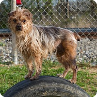 Adopt A Pet :: Roxie - Evansville, IN