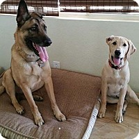 Adopt A Pet :: Sophie - San Diego, CA