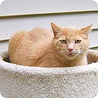 Adopt A Pet :: Jack - Howell, MI
