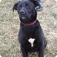 Adopt A Pet :: # 534-12 RESCUED! - Zanesville, OH