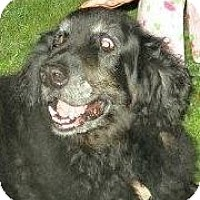 Adopt A Pet :: T. Willy - New Canaan, CT
