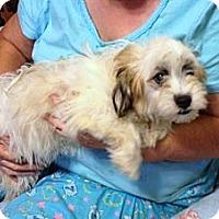 Adopt A Pet :: Buster - Hazard, KY