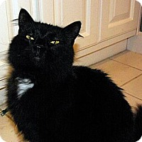 Adopt A Pet :: Scarlet - Mobile, AL
