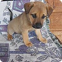 Adopt A Pet :: Lillie - San Diego, CA