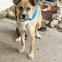 Adopt A Pet :: carter - Prestonsburg, KY