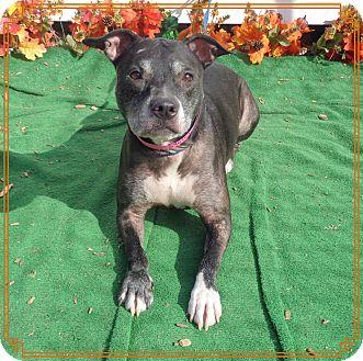 Pit Bull Terrier Mix Dog for adoption in Marietta, Georgia - IZABELLE