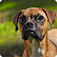 Adopt A Pet :: Froggie - Arden, NC