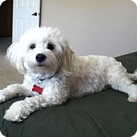 Adopt A Pet :: Willy - San Diego, CA