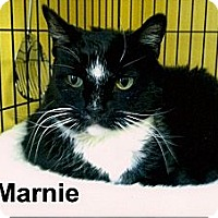 Adopt A Pet :: Marnie - Medway, MA