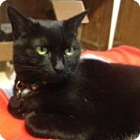 Adopt A Pet :: Sylvia - Cleveland, OH