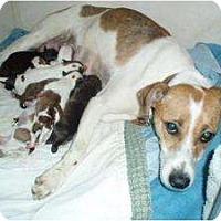 Adopt A Pet :: Holly - Douglasville, GA