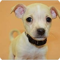 Adopt A Pet :: Dill - Broomfield, CO