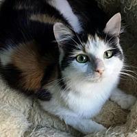 Adopt A Pet :: Katarina - Knoxville, TN