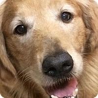 Adopt A Pet :: Chloe - New Canaan, CT