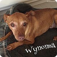Adopt A Pet :: Wynonna - Phoenix, AZ