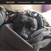 Adopt A Pet :: Gator - Medford, MA