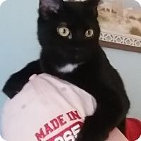 Adopt A Pet :: Emma - St. Louis, MO