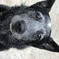 Adopt A Pet :: ACD Conway - Remus, MI
