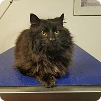 Adopt A Pet :: Cornelius - Fairmont, WV