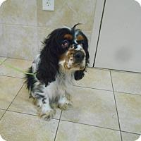Adopt A Pet :: Pecas - Kannapolis, NC