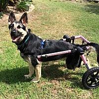 Adopt A Pet :: Clover - Mira Loma, CA