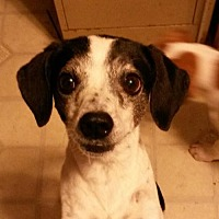 Adopt A Pet :: B-L Bessie - Lakeport, CA