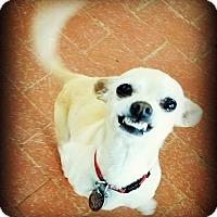 Adopt A Pet :: Button - Tijeras, NM