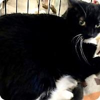 Adopt A Pet :: Samantha - Seminole, FL
