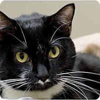 Adopt A Pet :: DeDe - Chicago, IL