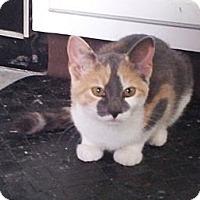 Adopt A Pet :: Maude - Portland, ME