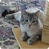Adopt A Pet :: Taisie - Arlington, VA