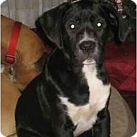 Adopt A Pet :: Oreilly - Albany, GA