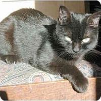 Adopt A Pet :: Kismet (sweet girl!) - Portland, OR