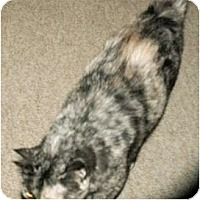 Adopt A Pet :: Peach & black - Precious - Scottsdale, AZ