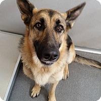 Adopt A Pet :: Sasha - Evergreen Park, IL
