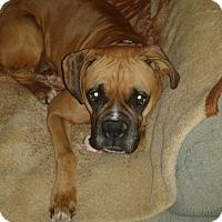 Adopt A Pet :: Rory - Hesperia, CA