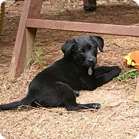 Adopt A Pet :: Penny P - Knoxville, TN